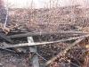 лес на крыше 2010